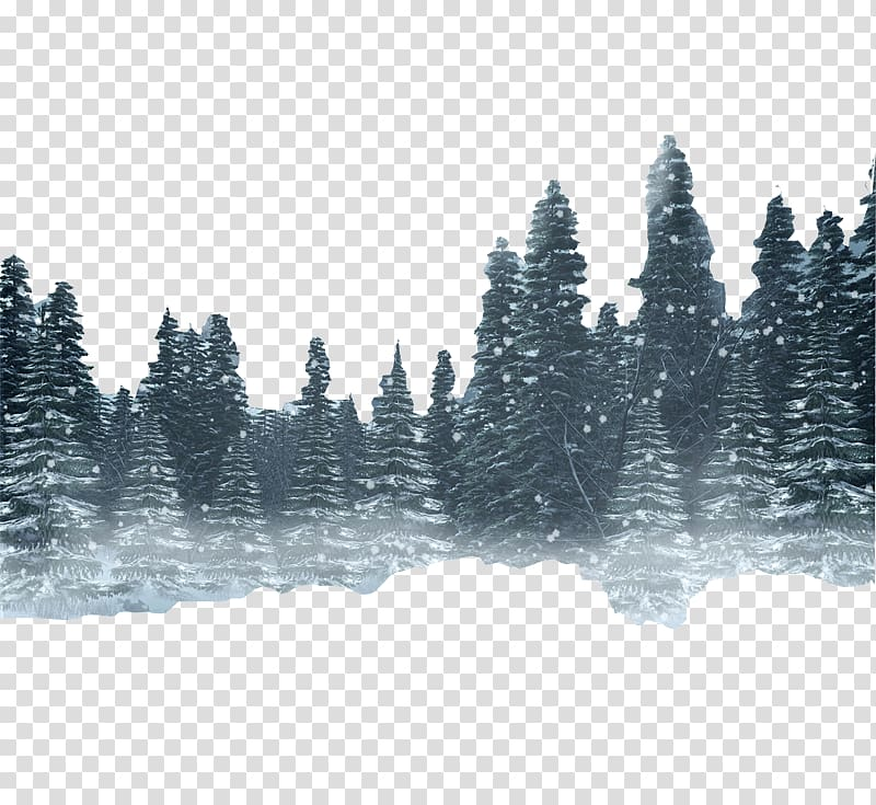 Conifer tree illustration, Snow Forest Winter, forest.