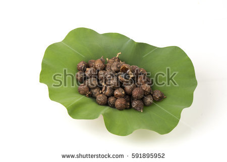 Soapberry Stock Images, Royalty.