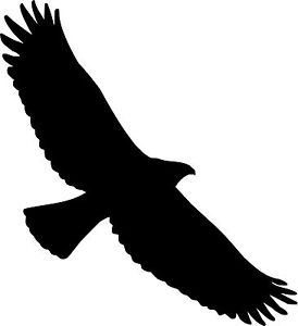 Soaring Eagle Bird Silhouette Decal Vinyl Sticker Car Van.