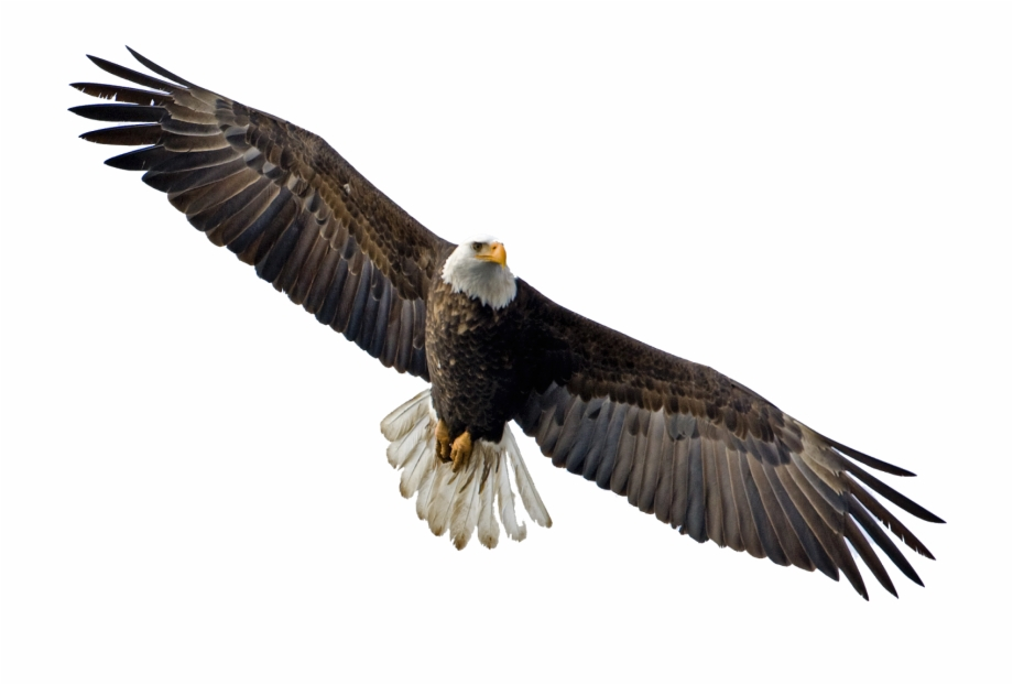 Download Soaring Eagle Transparent Png.