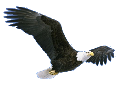 Download Free png Flying Eagle PNG Pic.