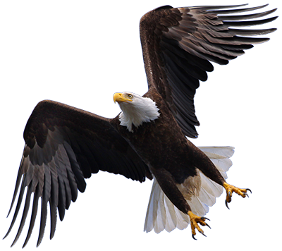 Eagle PNG HD Transparent Eagle HD.PNG Images..