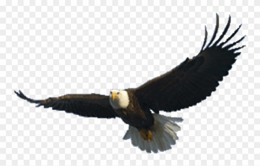 Free Png Download Eagle Png Images Background Png Images.