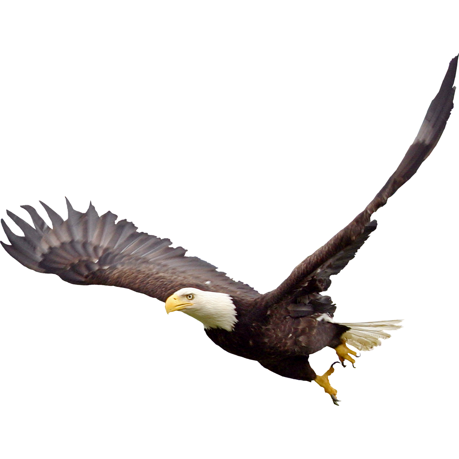 Soaring Eagle PNG File.