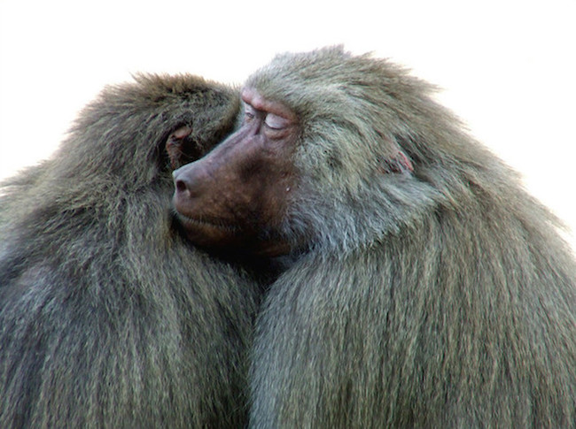 You Are The Other Baboon: A Comprehensive Guide to Building Trust.