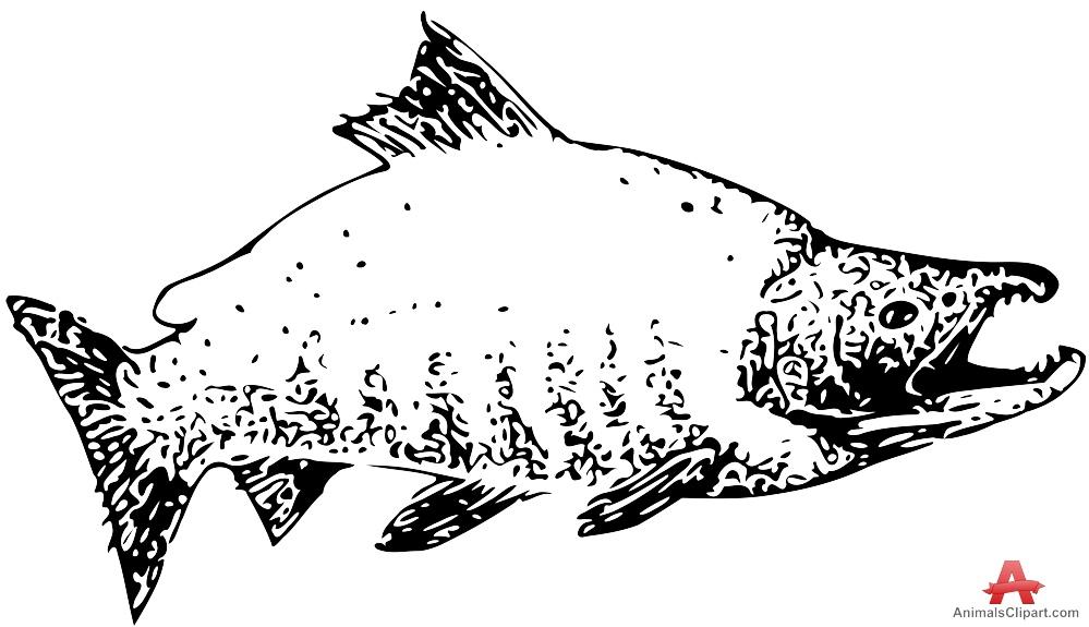 Sockeye Salmon Clipart Drawing.