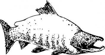Salmon clip art Free Vector.