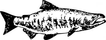 Sockeye Salmon clip art Free Vector.