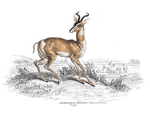 Old Sudan Clip Art, Vector Images & Illustrations.