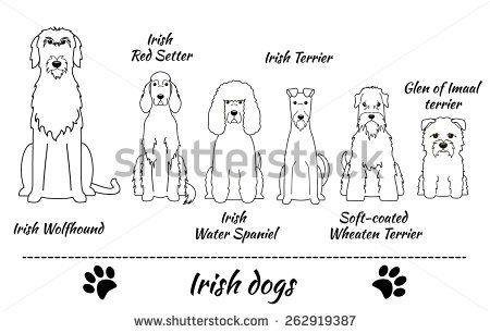 Soft Coated Wheaten Terrier Stock Images, Royalty.