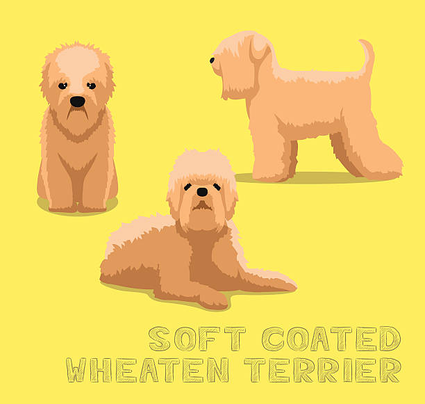 Soft Coated Wheaten Terrier Clip Art, Vector Images.