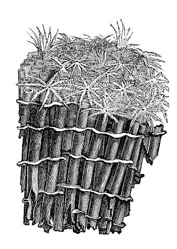 Soft Coral Clip Art, Vector Images & Illustrations.