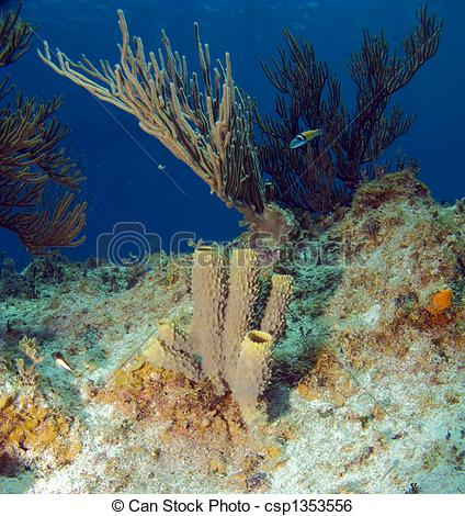 Stock Image of Tube Sponge and Soft Coral on a Caribbean Reef.