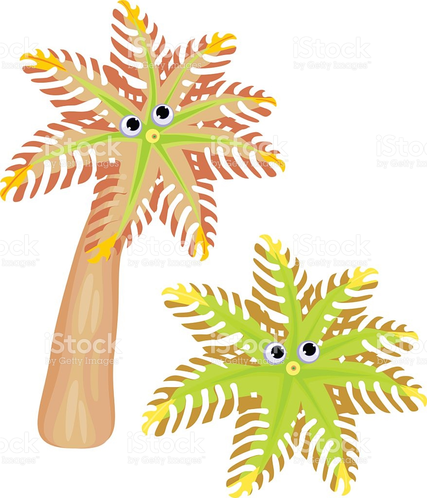 Soft Coral Clavularia Papaya stock vector art 519524448.
