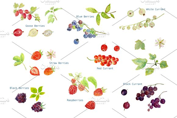 Watercolor Soft Fruit Clipart ~ Illustrations on Creative Market.
