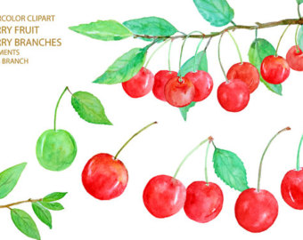 Digital watercolour soft fruit clipart printable by CornerCroft.