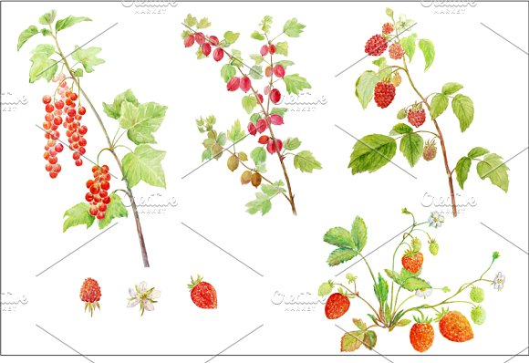 Watercolor Soft Fruit Branch ~ Illustrations on Creative Market.