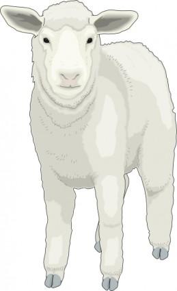 Soft Fur Clip Art Download.
