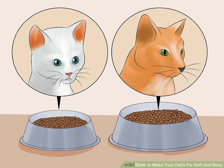 How to Make Your Cat's Fur Soft and Shiny (with Pictures).