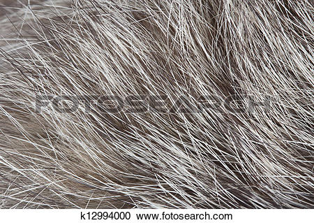 Stock Photography of Abstract Soft Fur Macro Texture k12994000.