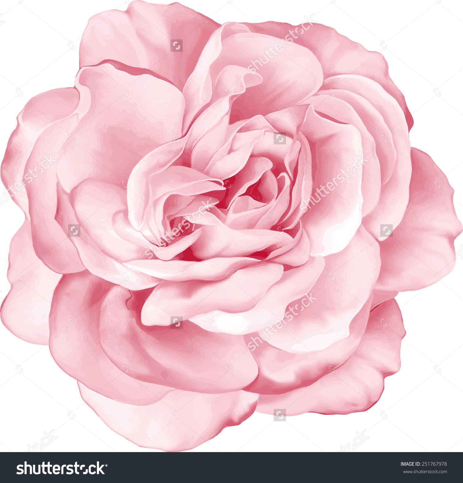 Pink Rose Clipart Rose Frame 7 Best Images Of Fancy