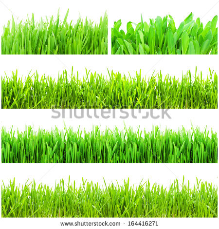 Green Grass Soil Isolated On White Stock Photo 125440187.