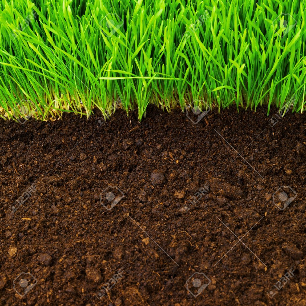 Soil and green grass clipart clipground for Soil and green