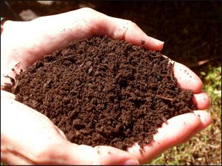 Clipart Soil.