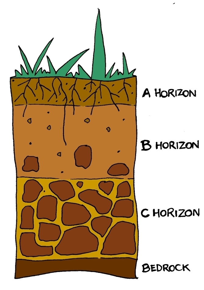 Showing post & media for Cartoon soil horizon.