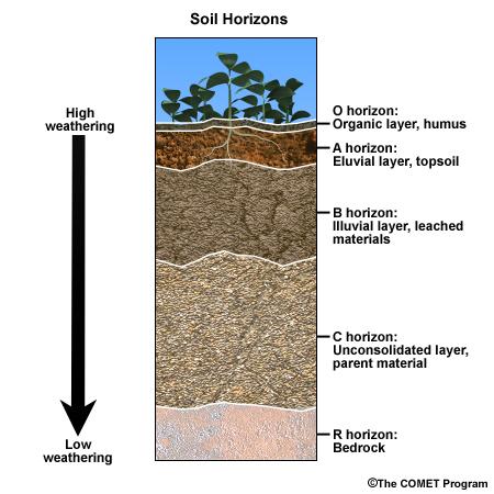Showing post & media for Cartoon soil horizon.