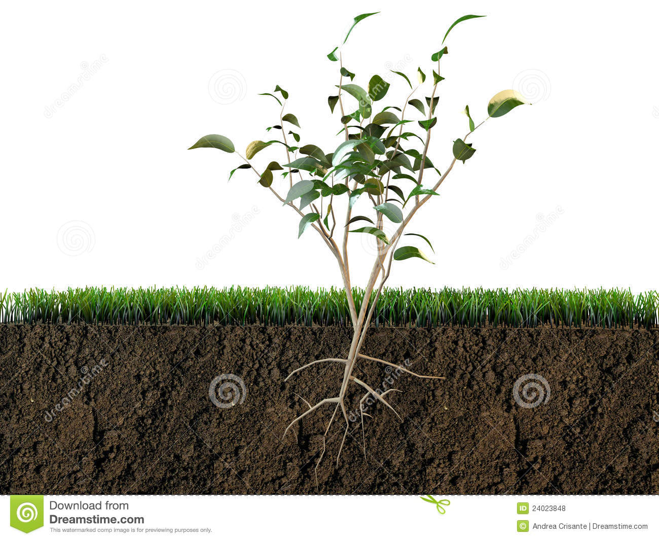 Soil Plant Clipart Clipground