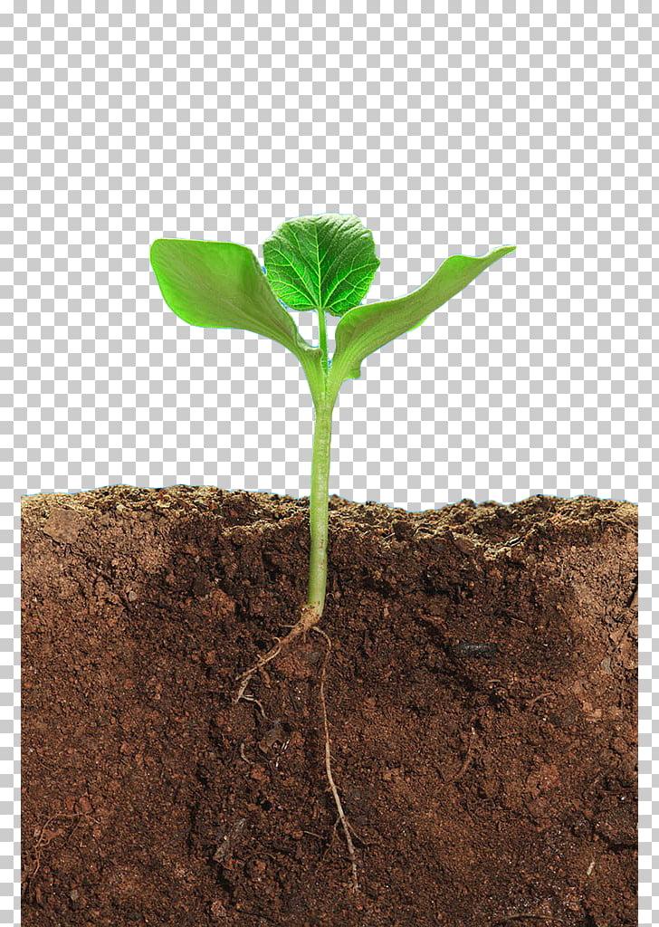 Soil structure Earth Plant Soil horizon, Green plant soil.