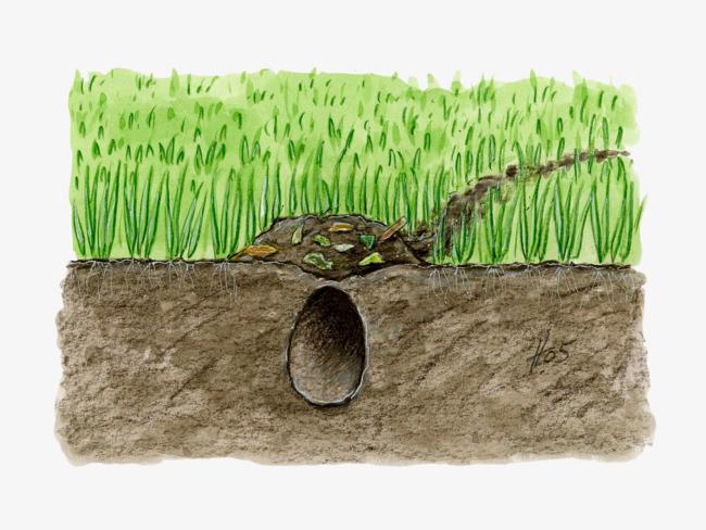 1026 Soil free clipart.