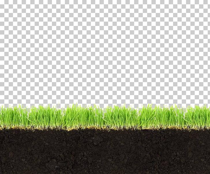 Soil horizon Meadow Grass, Grassland soil profile, green.