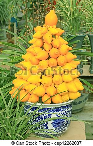 Stock Photos of solanaceae fruit herbs.