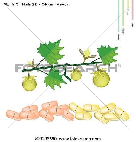 Clipart of Solanum Stramonifolium Fruits with Vitamin C, B3 and.