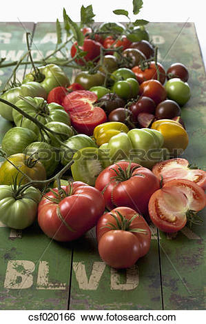 Stock Images of Plenty varieties of tomatoes (Solanum lycopersicum.