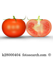 Solanum lycopersicum Clip Art and Stock Illustrations. 14 solanum.