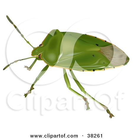 Clipart Illustration of a Green Stink Bug Or Green Soldier Bug.