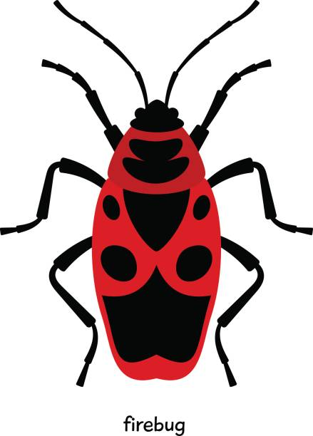 Soldier Beetle Clip Art, Vector Images & Illustrations.