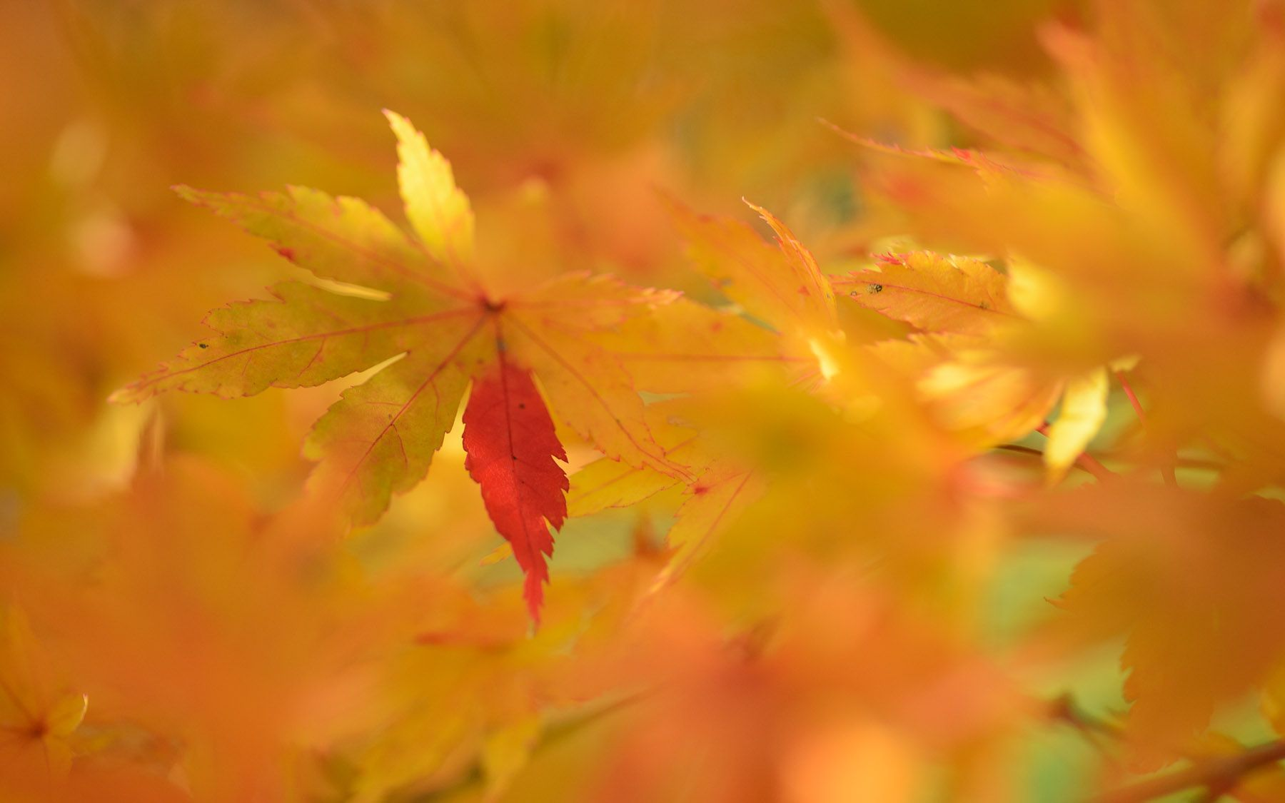 Nature Wallpaper: Fall Color Wallpaper Wide with High Resolution.
