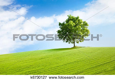 Picture of solitary tree in beautiful landscape k6730127.