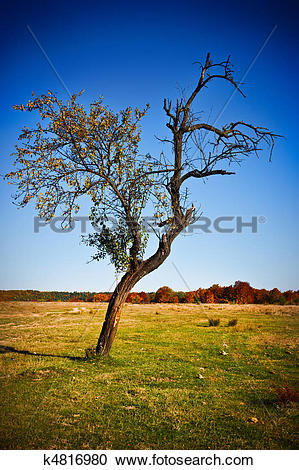 Stock Photography of Solitary tree in a meadow k4816980.