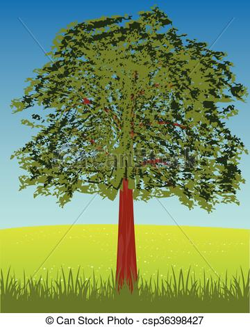 Vector Illustration of Solitary tree on glade.