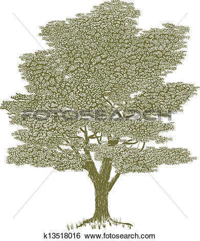 Clip Art of Woodcut Solitary Tree k13518016.