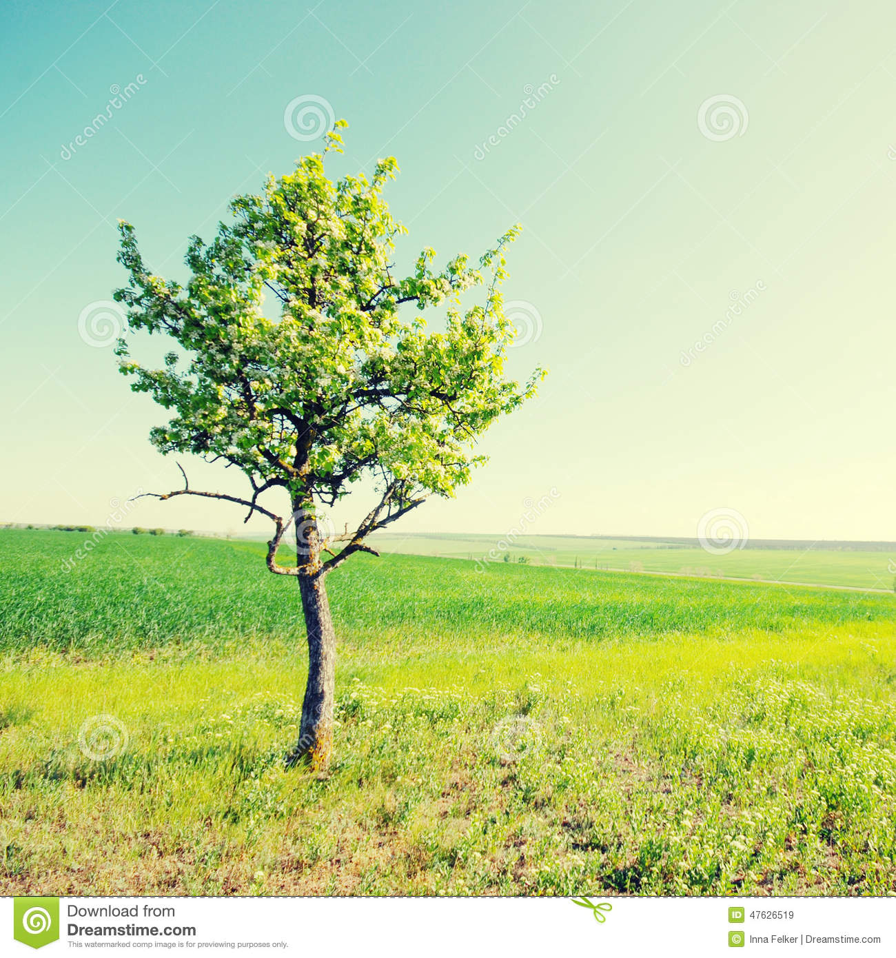 Solitary Tree On Green Grassy Field And Blue Sky Background Stock.