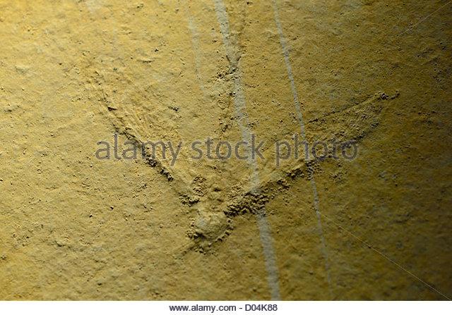 Paleontological Stock Photos & Paleontological Stock Images.