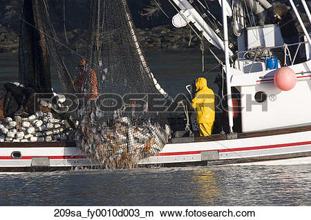 Stock Photo of Commercial seiner bringing in net w/load of silver.