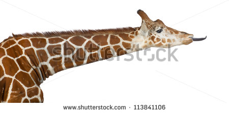 Giraffe Tongue Stock Photos, Royalty.