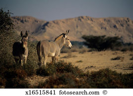 Somalia Stock Photos and Images. 3,043 somalia pictures and.